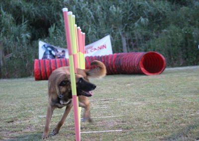 club-canino10
