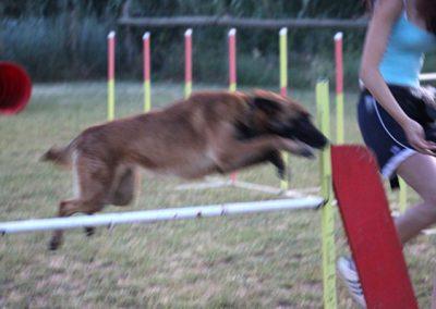 club-canino11