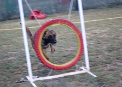club-canino14
