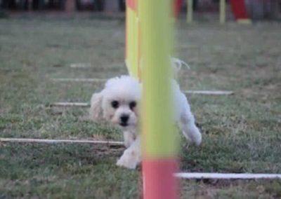 club-canino9