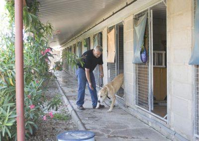 residencia-canina-1